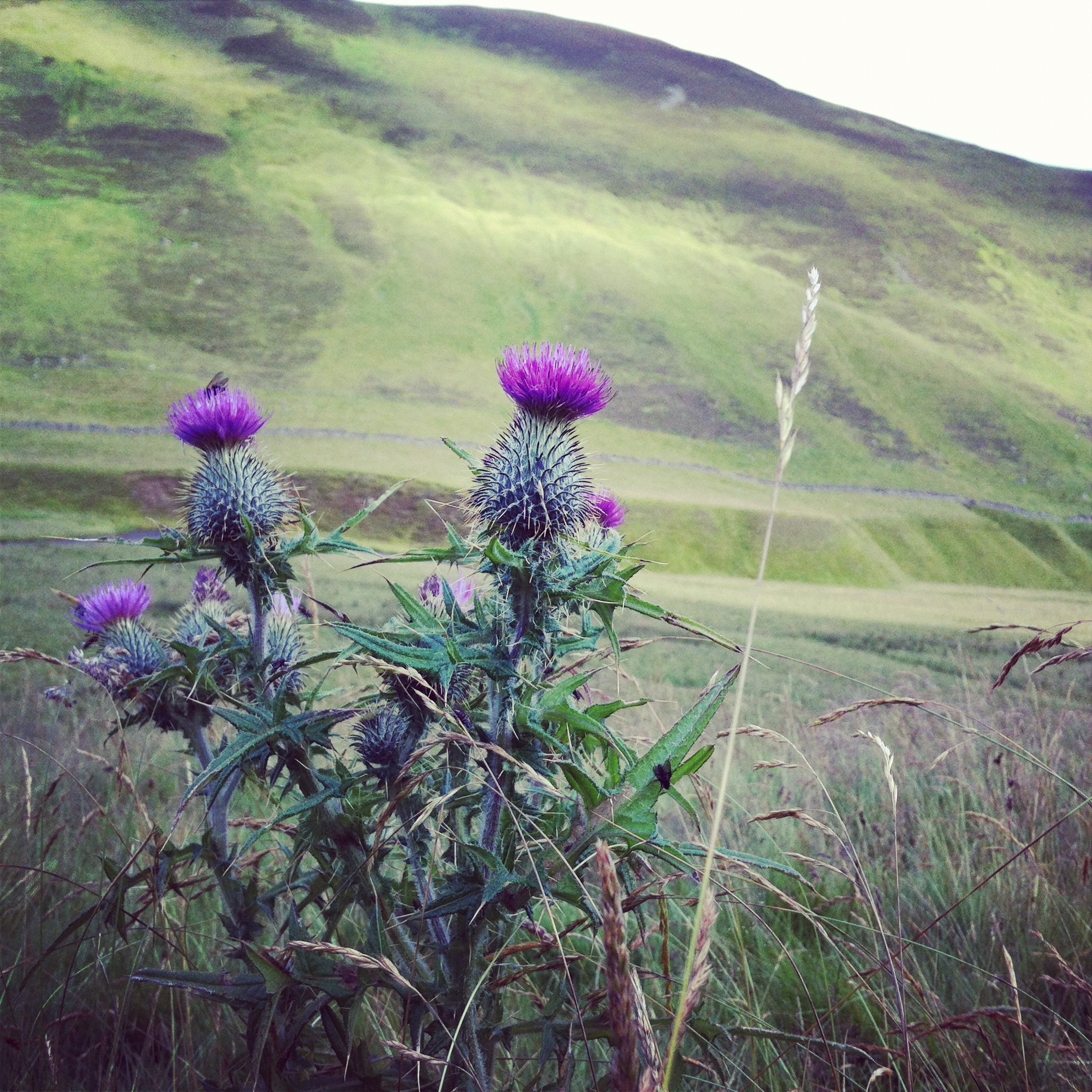 Haggis and the Highlands