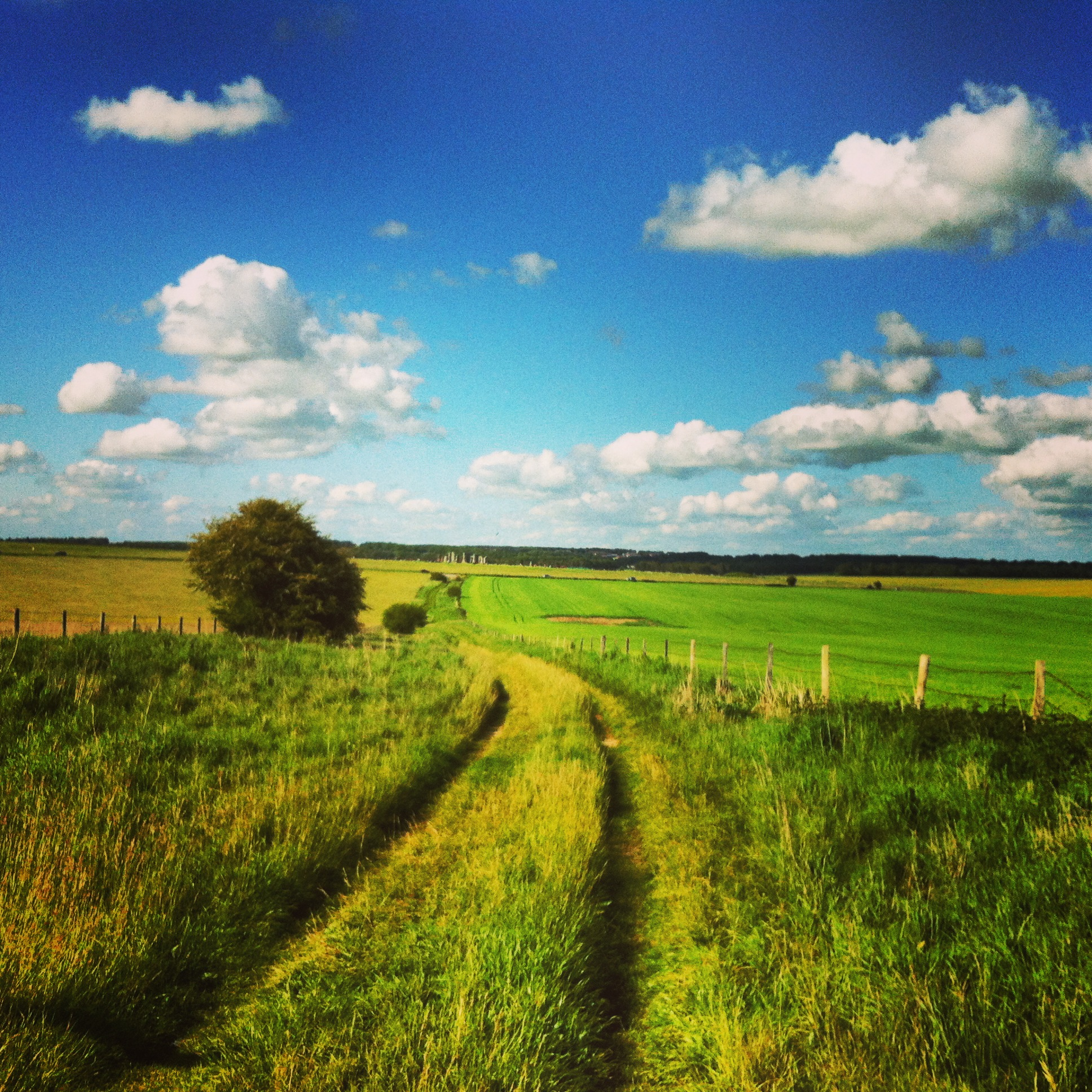 Wiltshire wonders; food to seek out when you're outwest